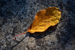 Autumn. Foglia in autunno - Leaf in autumn Royalty Free Stock Images