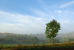 Autumn fogs Royalty Free Stock Photography