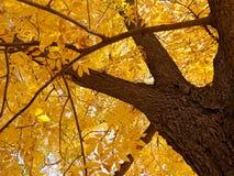 Autumn foliage 1 Royalty Free Stock Photo