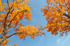 Autumn Foliage. And sky in New York state Stock Photo
