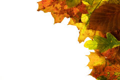 Autumn foliage. Laterally in the picture Stock Photos
