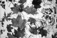 Autumn foliage. On a net royalty free stock photo