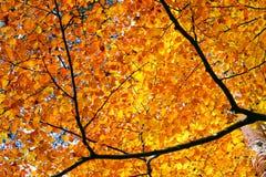 Autumn foliage. At sunny day Royalty Free Stock Image