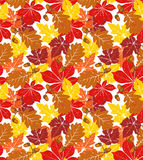 Autumn foliage. Seamless background with foliage and acorns Royalty Free Stock Photos