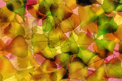 Autumn foliage. The Abstract background Stock Photos