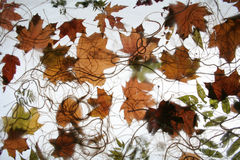 Autumn foliage 2. Autumn foliage on a net Royalty Free Stock Photography