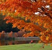 Autumn foliage royalty free stock photography