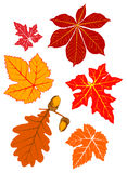 Autumn foliage. Bright autumn leaves from various trees Stock Photography
