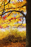 Autumn foliage. In bear mountain, new york Royalty Free Stock Image