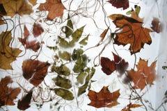 Autumn foliage 3. Autumn foliage on a net royalty free stock image