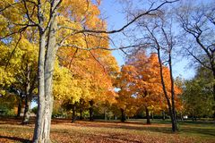 Autumn foliage. Beautiful fall trees in a park, in various colors, set against a blue sky Royalty Free Stock Photos