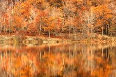 Autumn foliage. Golden autumn foliage around New Jersey lake in Appalachian mountains Royalty Free Stock Photography