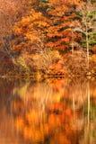 Autumn foliage. Golden autumn foliage around New Jersey lake in Appalachian mountains Stock Photos
