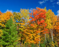 Autumn foliage against blue sky Stock Photo