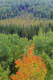 Autumn foliage at Algonquin, Canada Royalty Free Stock Photo