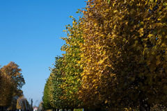 Autumn foliage alley with gradient from green to yellow Stock Photo