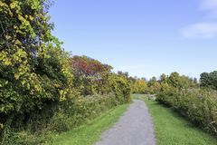 Autumn foliage along a gravel hiking trail. Fall foliage in October. Sunny morning in the park. Rochester, New York royalty free stock images