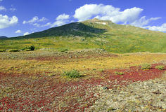 Autumn foliage - Alpine tundra in fall colors, Rocky Mountains, USA Stock Photography
