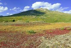 Autumn foliage - Alpine tundra in fall colors, Rocky Mountains, USA stock photography