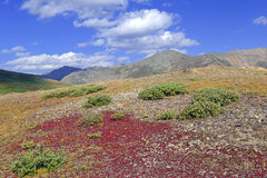 Autumn foliage - Alpine tundra in fall colors, Rocky Mountains, USA Stock Images