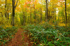 Autumn foliage in Aomori, Japan Royalty Free Stock Photo