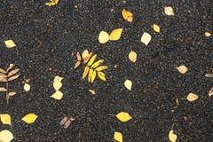 Autumn foliage on asphalt Stock Photography