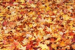 Autumn foliage background Royalty Free Stock Images