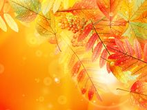 Autumn foliage background. Stock Photos