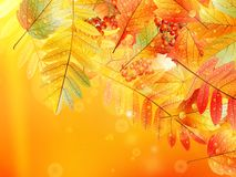 Autumn foliage background. stock illustration
