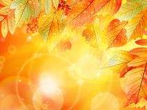 Autumn foliage background. Stock Images