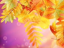Autumn foliage background. Stock Photography