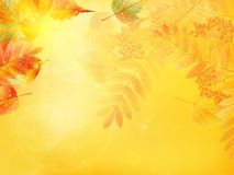 Autumn foliage background. Royalty Free Stock Photo