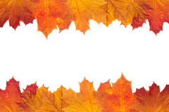 Autumn foliage background Stock Photography