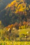 Autumn foliage background Stock Image
