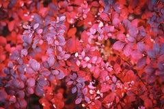 Autumn foliage background Royalty Free Stock Photos