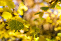Autumn foliage background. Selective focus image cross processed Royalty Free Stock Images