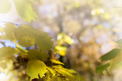 Autumn foliage background. Selective focus image cross processed Royalty Free Stock Image