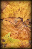 Autumn Foliage Background Vignetted Grunge Texture Royalty Free Stock Photography