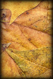 Autumn Foliage Background Vignetted Grunge Texture Royalty Free Stock Photos