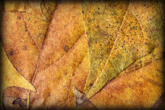 Autumn Foliage Background Vignetted Grunge Texture Royalty Free Stock Image