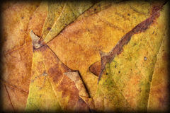 Autumn Foliage Background Vignetted Grunge Texture Royalty Free Stock Images