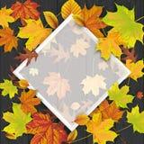 Black Wood Autumn Foliage Frame. Autumn foliage on the black wooden background and white frame Royalty Free Stock Image