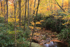 Autumn Foliage Blue Ridge Appalachian-Berge NC lizenzfreies stockfoto