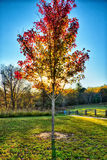 Autumn foliage on blue ridge parkway near stone mountain  north Royalty Free Stock Photos