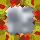 Autumn foliage blurred background. Vector illustration. eps 8 Stock Image