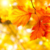 Autumn Foliage Stock Photography