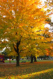 Autumn. Foliage of bright orange and yellows in a park with warm colored leaves that covers the ground Royalty Free Stock Image