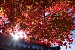 Autumn Foliage brillante a Kyoto Fotografia Stock Libera da Diritti