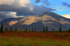 Autumn Foliage in Broad Pass, Alaska royalty free stock photography