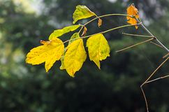 Autumn foliage in a city park. Some yellow  and green leaves Royalty Free Stock Images